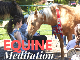 Equine Therapy Meditation ~ until Oct 30th with Richard Capener $65 pre-register