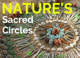 Creating Botanical Mandalas ~ with Wendy Fouts