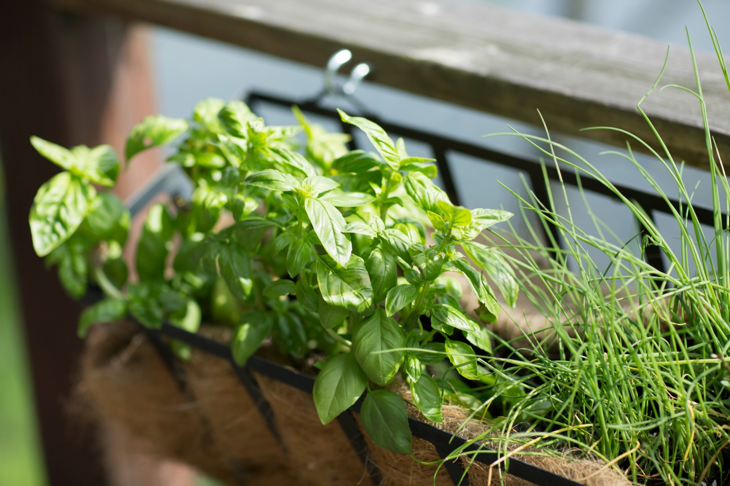 Grail Kitchen Herb Garden
