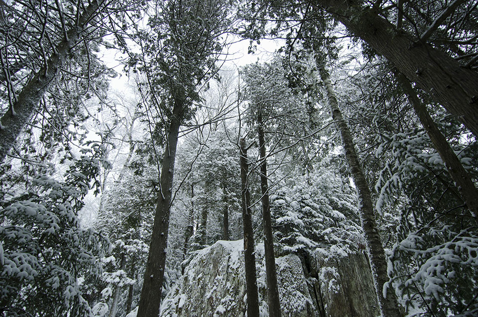 Winter Forest at Grail Springs